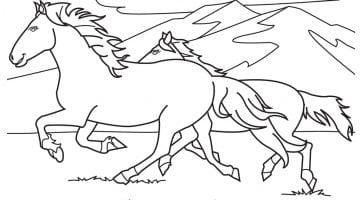 Horse Colouring In