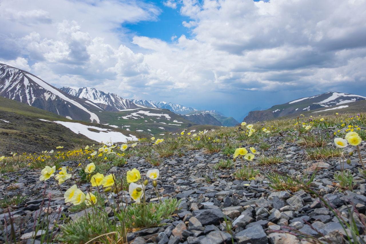 Arctic Tundra Plants