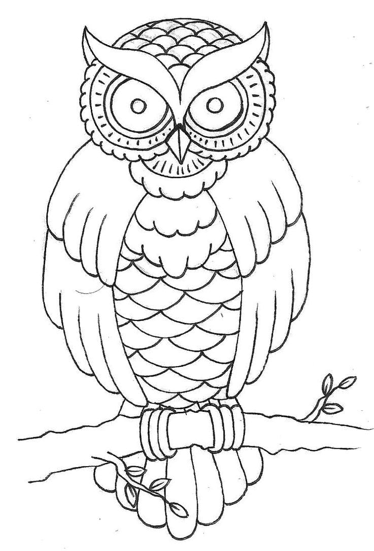 Free Owl Outline, Download Free Clip Art, Free Clip Art On Clipart