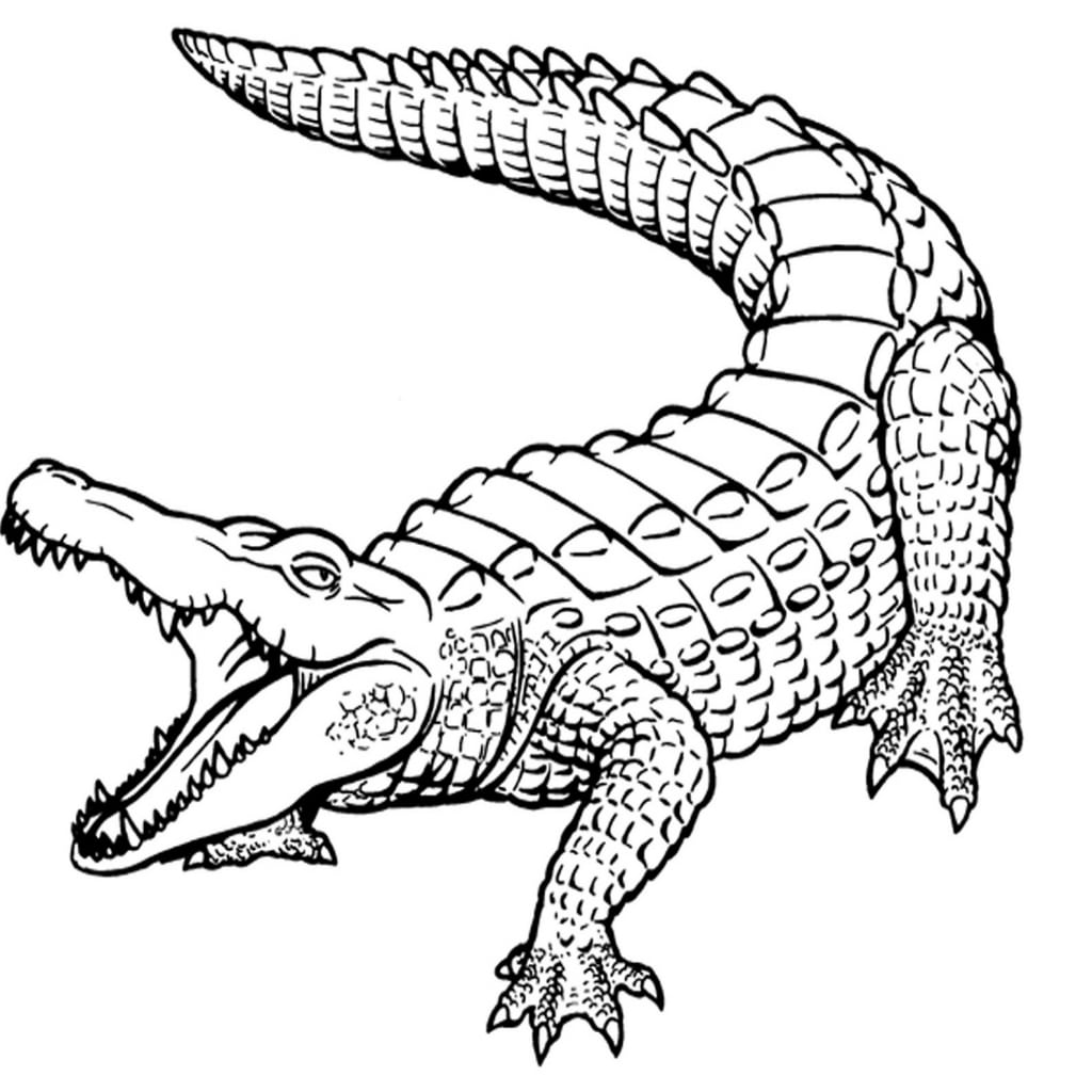Awesome Crocodile Page To Color Design Printable Coloring Sheet 4