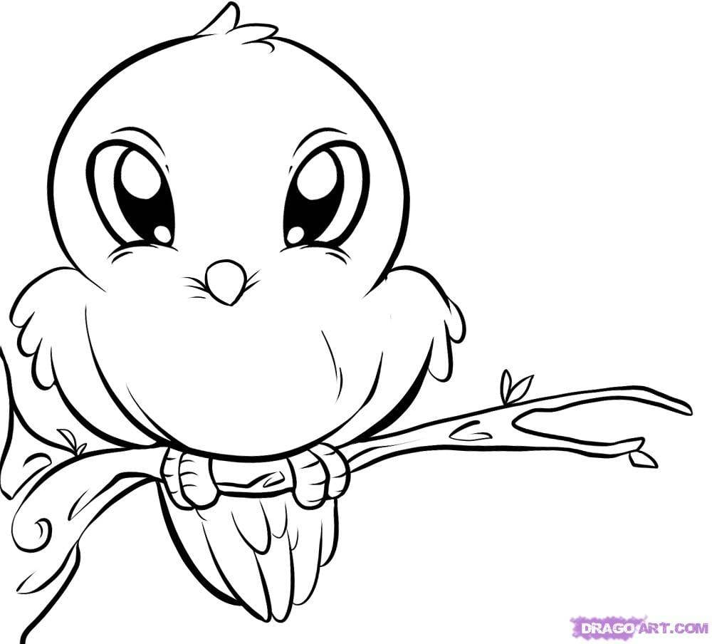 Bird Coloring Pages Dr Odd Online Sheet Animal Robin Of A For In