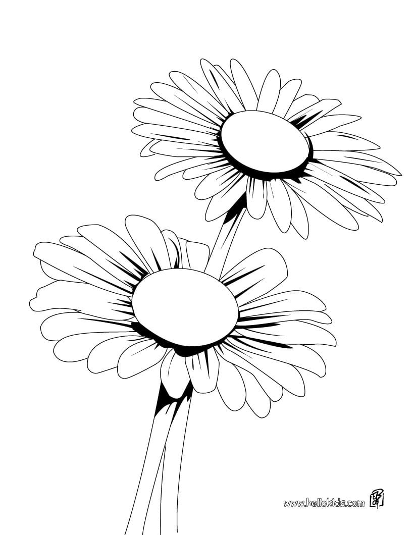 Daisy Bunch Coloring Pages