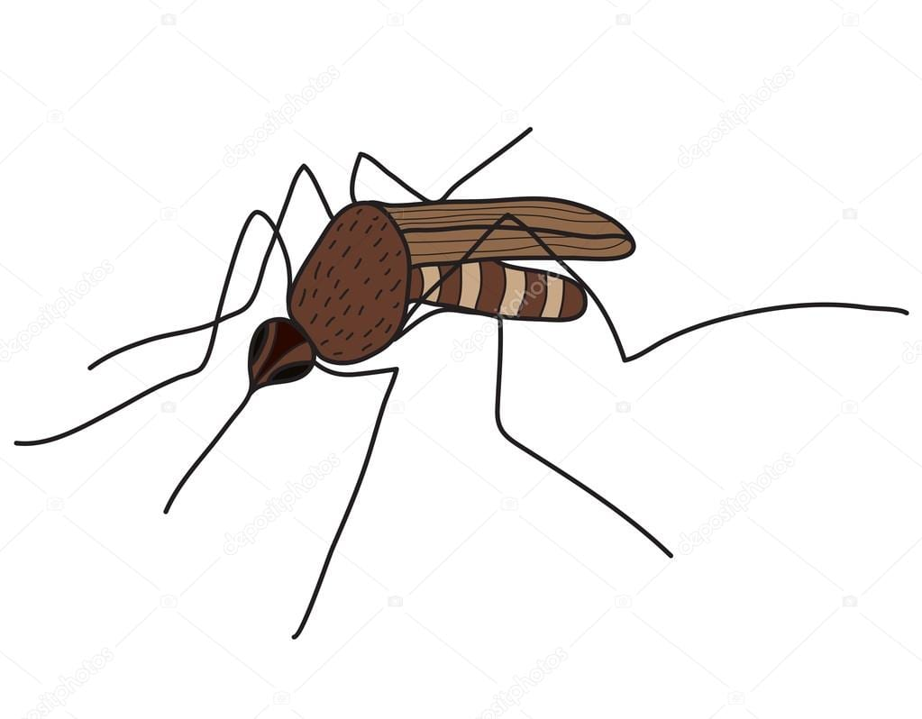 Cartoon Color Mosquito Isolated On White Background  Vector