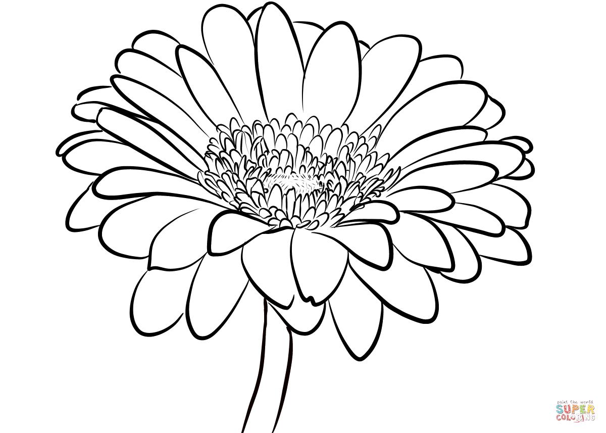 Gerbera Daisy Coloring Page