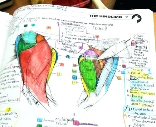 Good Netter Anatomy Coloring Book Simple Netter Coloring Book Neo
