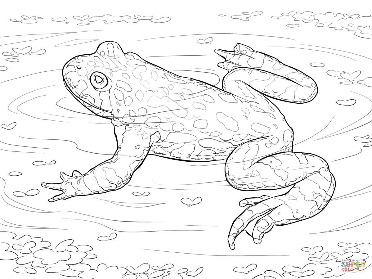 Toads Coloring Pages