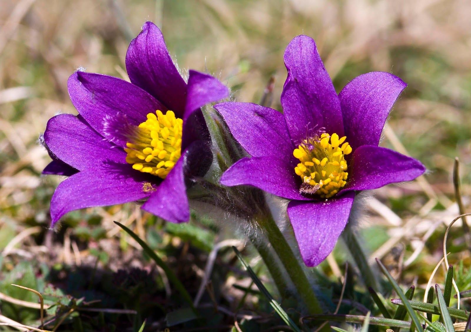 Arctic Tundra  Plants Of The North American Tundra