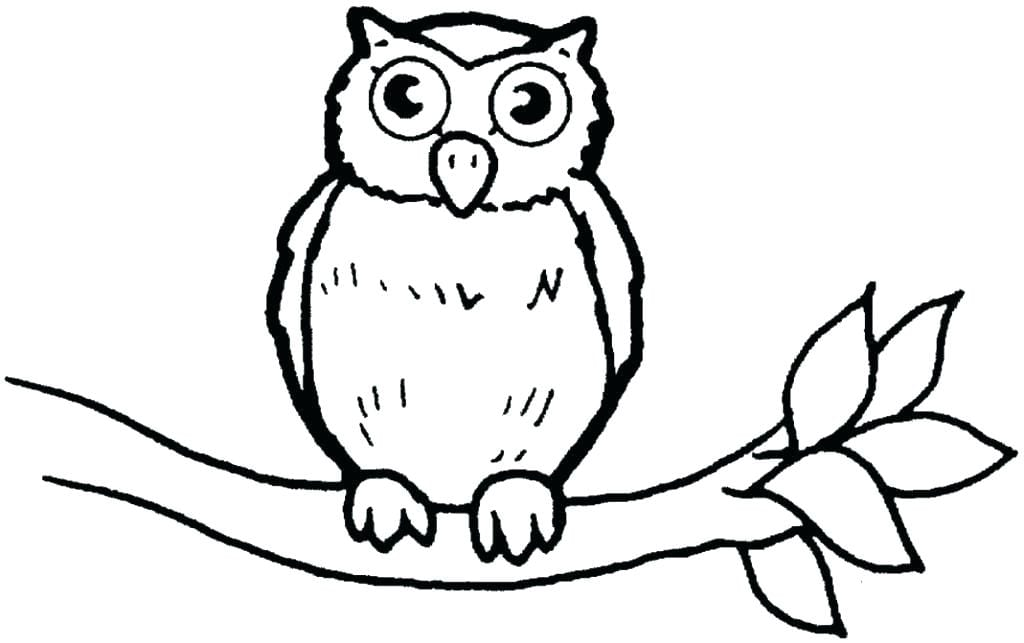 Images Of Owls To Color