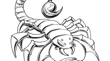 Scorpion Pictures To Color