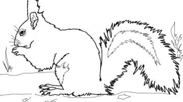 Free Printable Squirrel Pictures