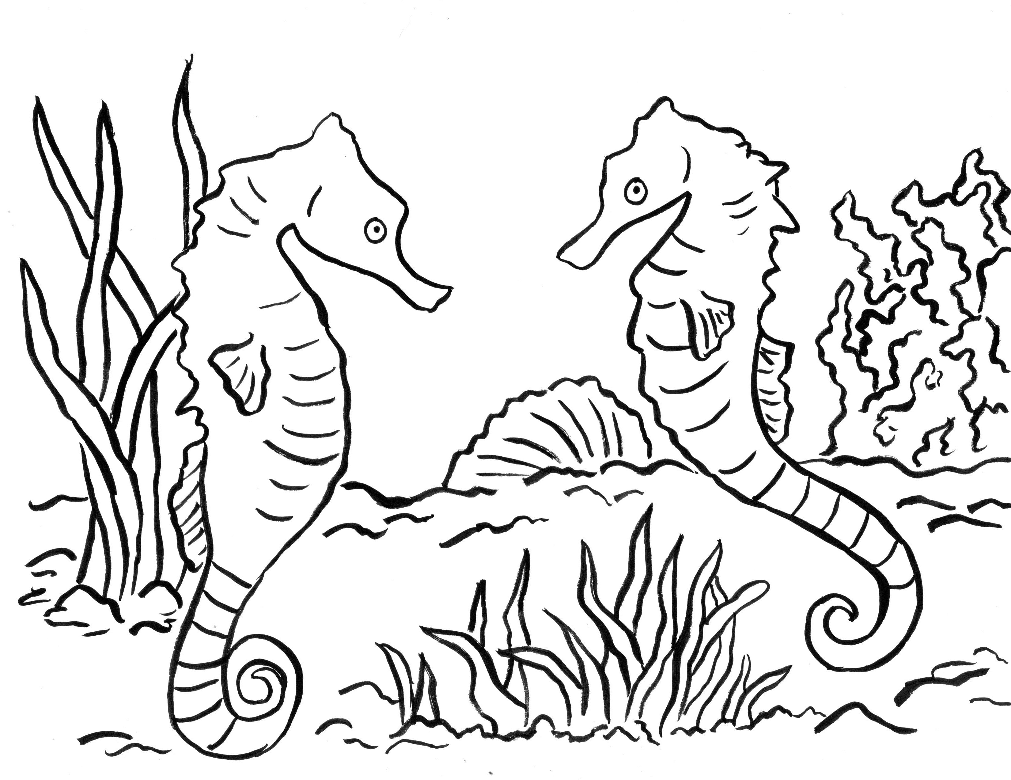 Seahorse Coloring Page Pages New And