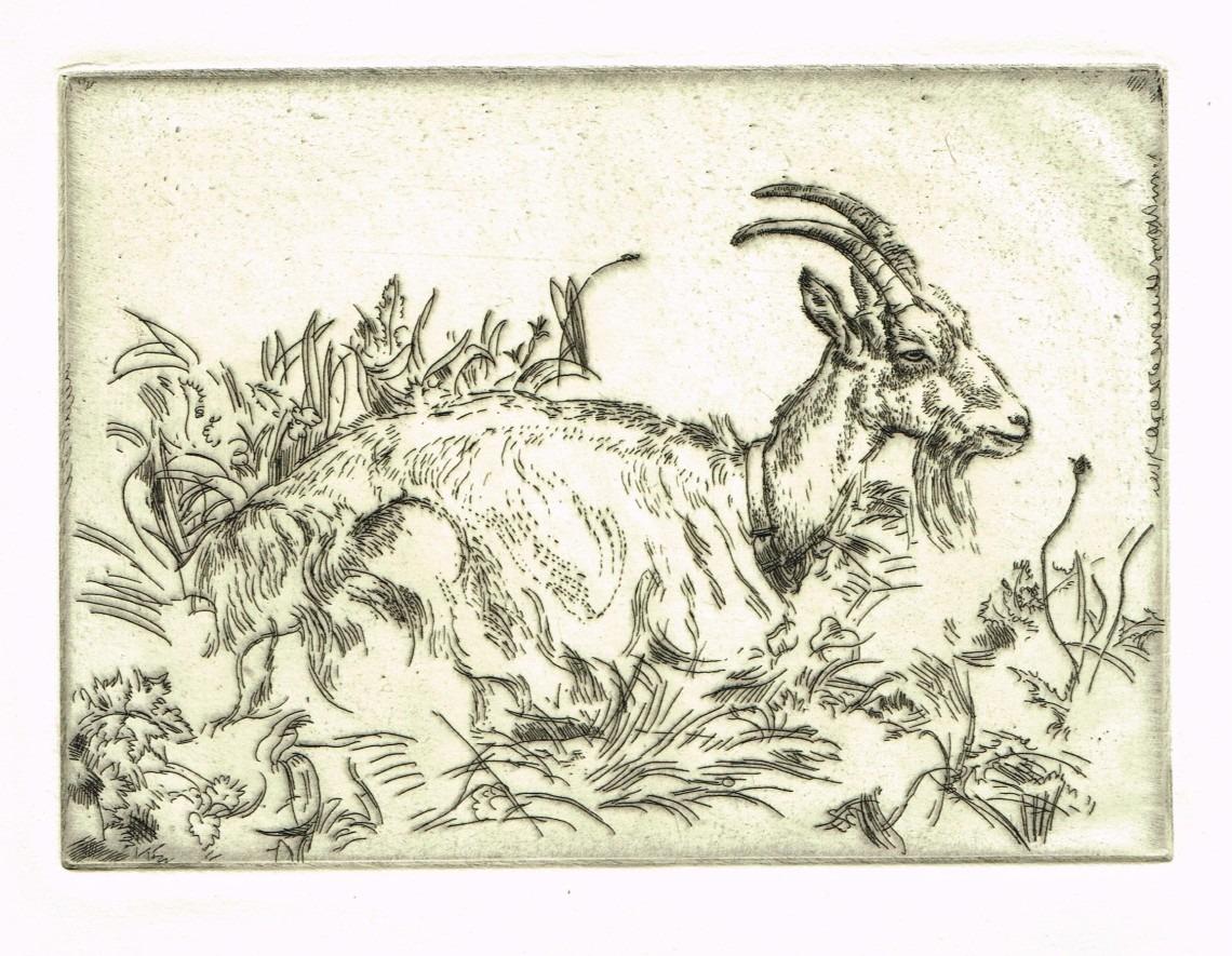 The Goat Print By Leon Underwood
