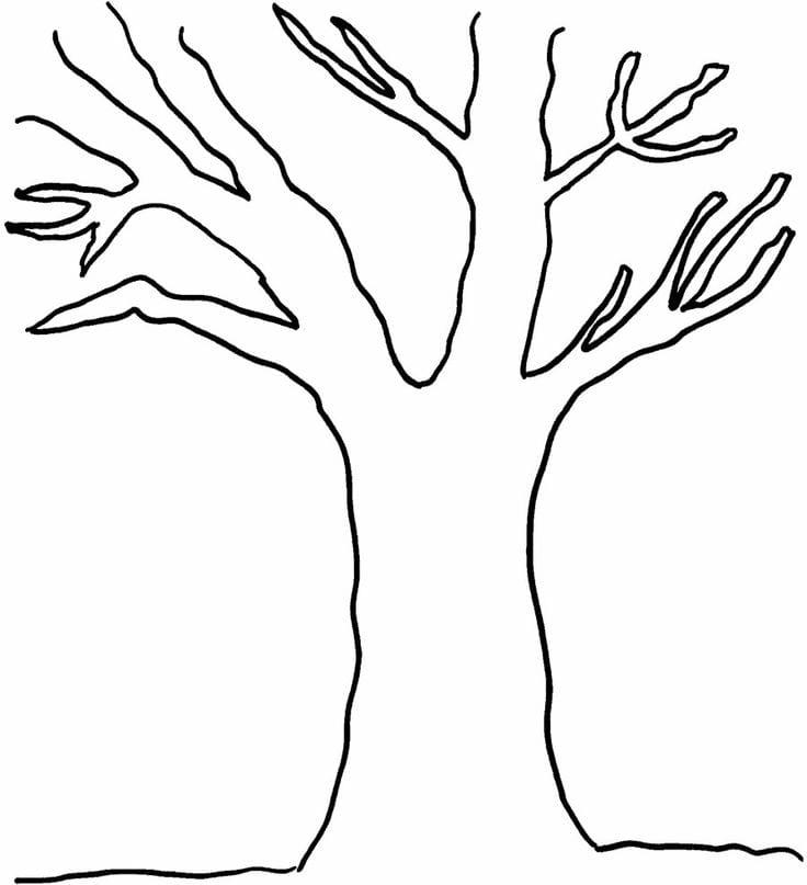 Free Printable Tree Coloring Sheets