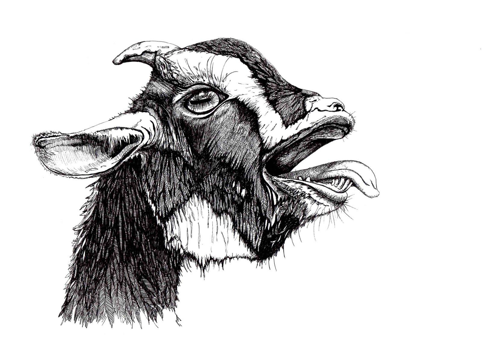 African Dwarf Goat Print