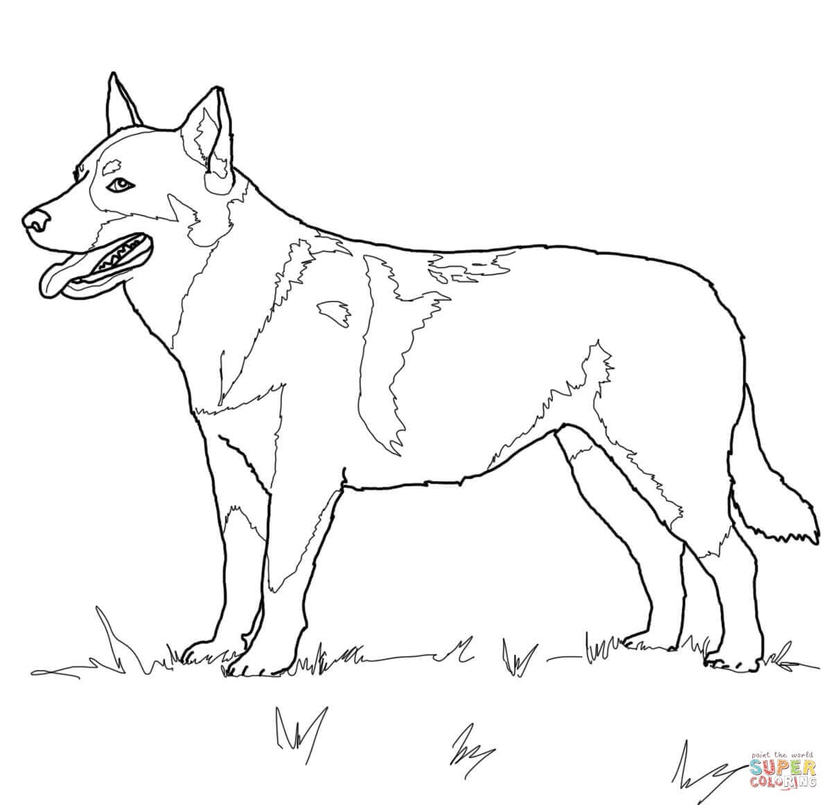 Australian Cattle Dog Coloring Page