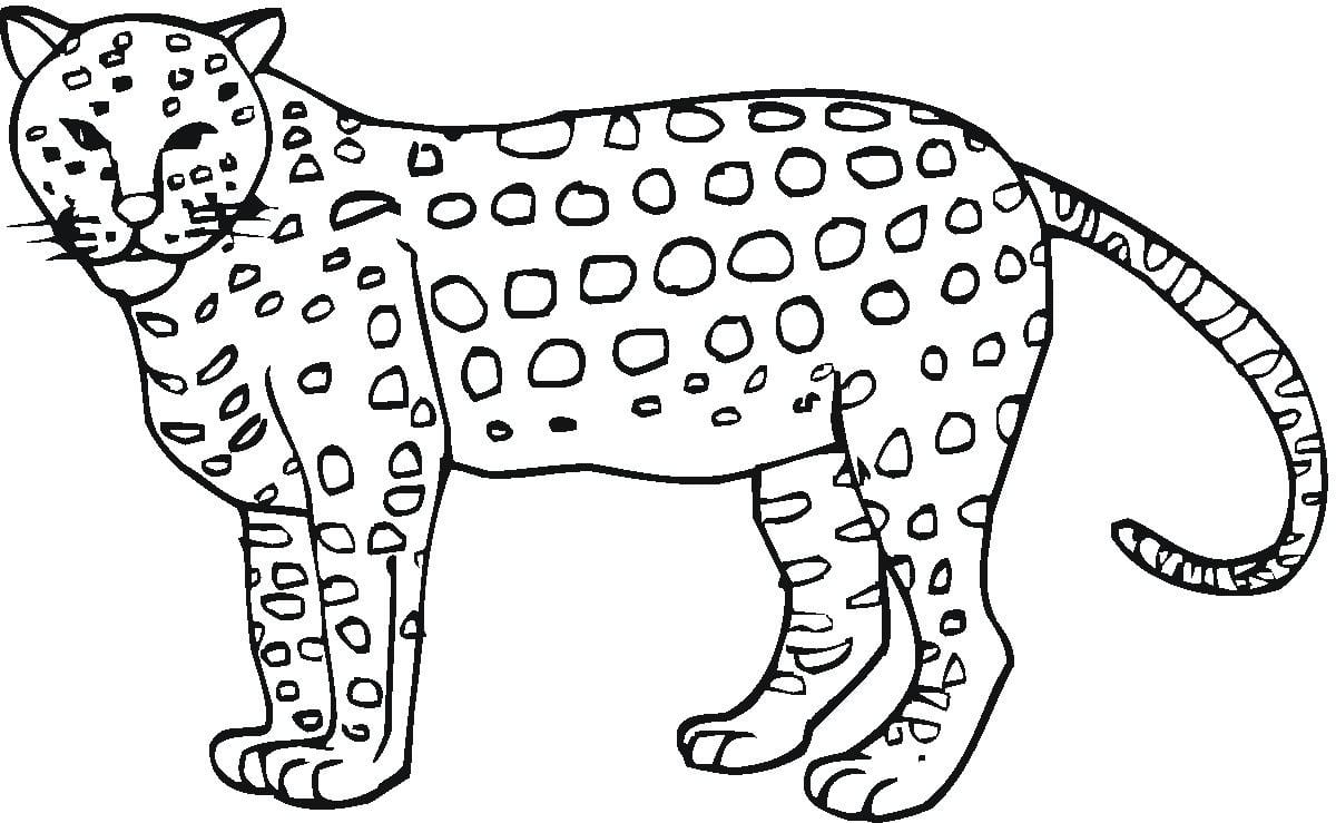 New Cheetah Coloring Page Collection