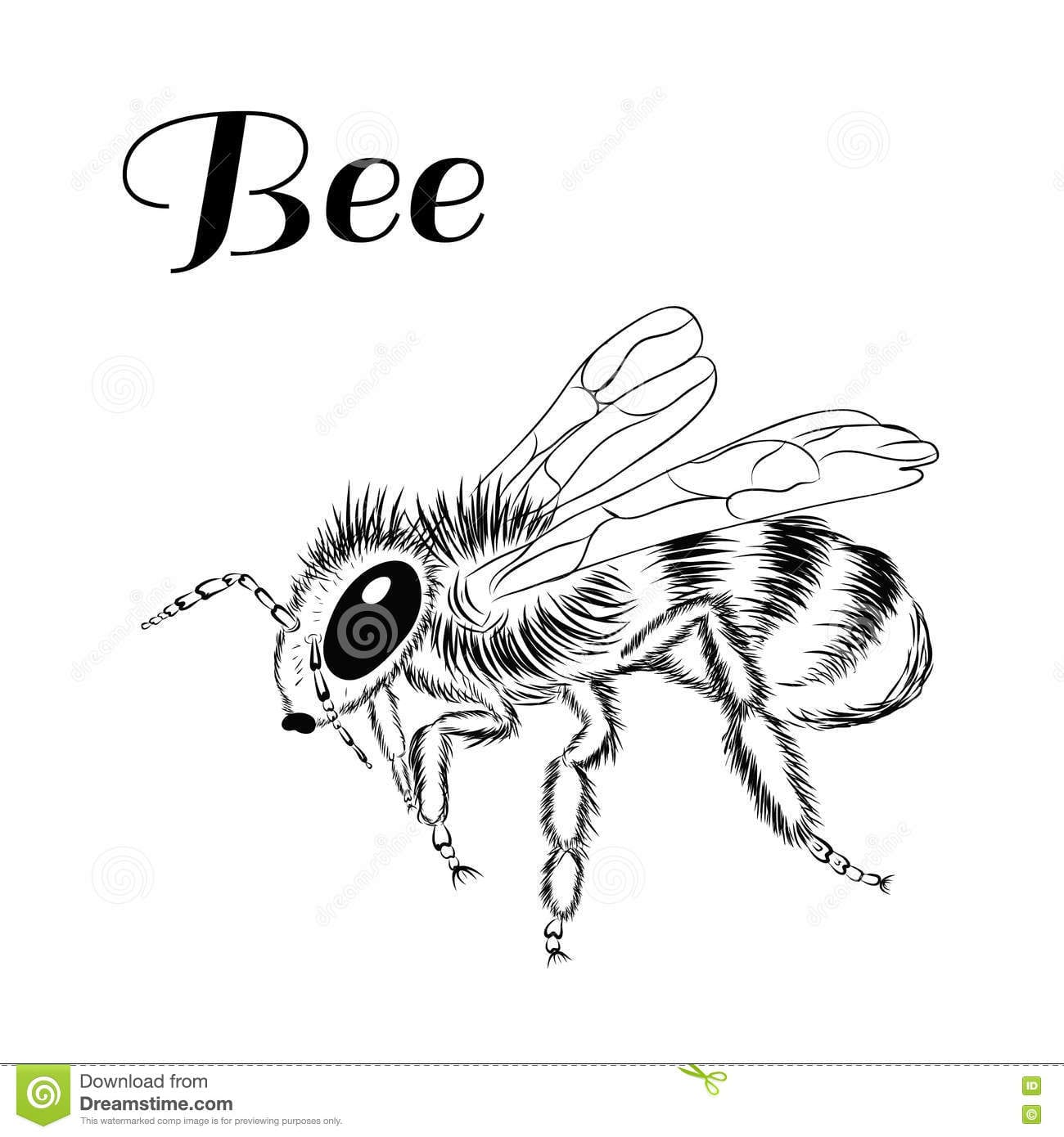 Without Color Picture Of Bee On White Background  Stock Vector