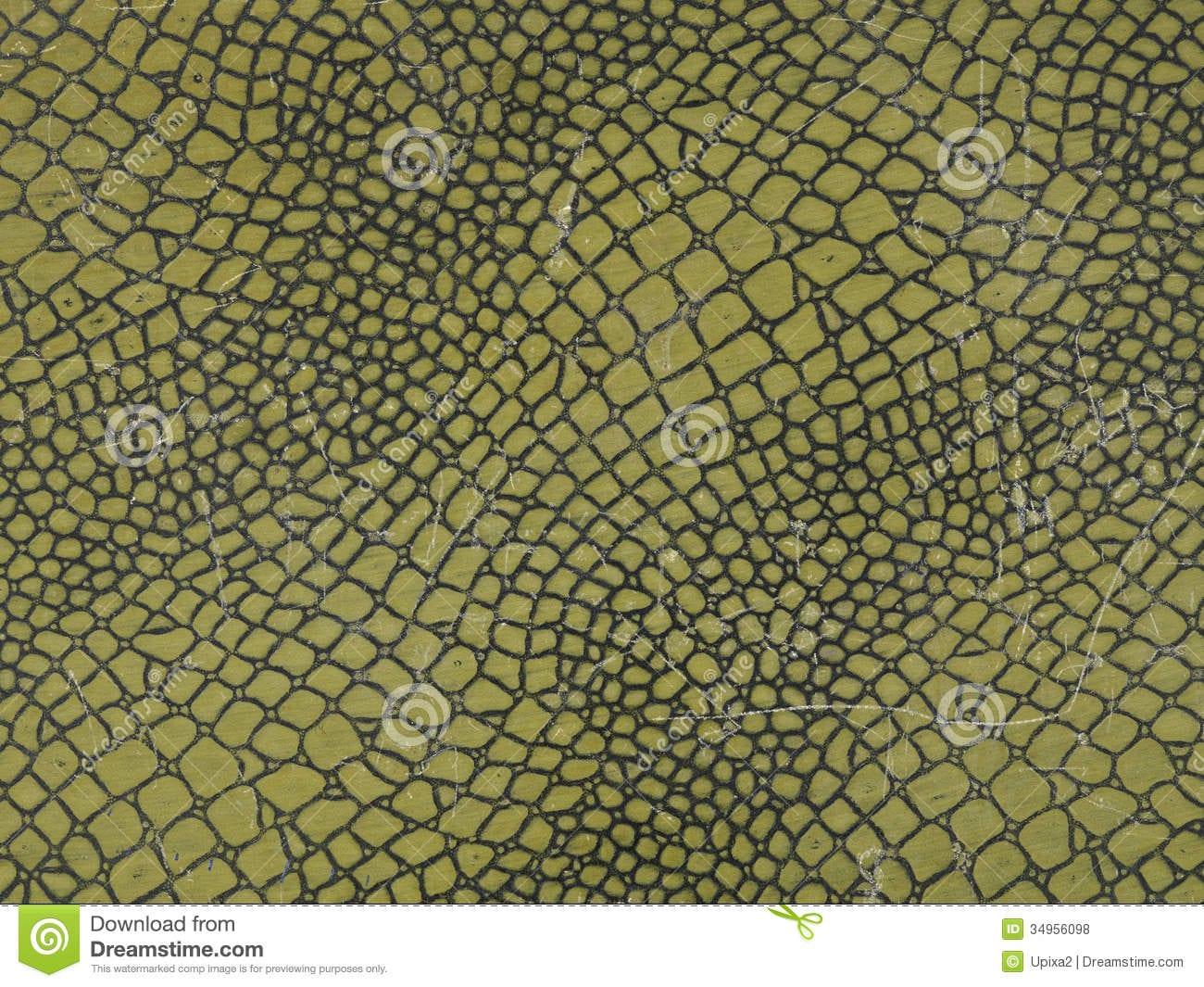Croco, Crocodile, Background, Green Stock Photo
