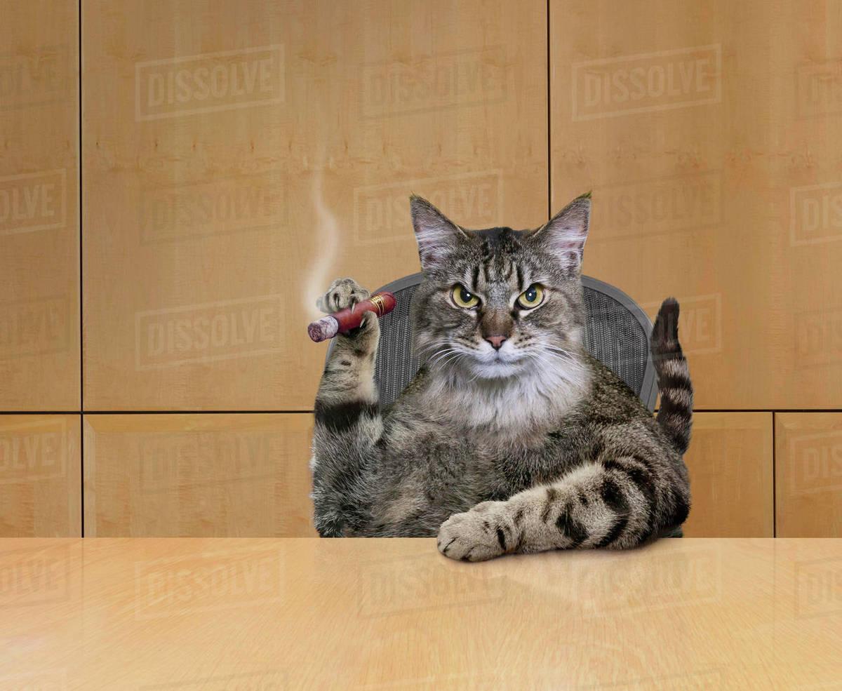 Cat Smoking Cigar In Office NEO