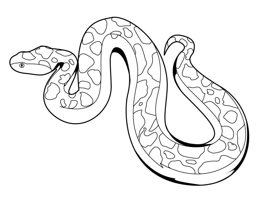 Image Result For Snake Coloring Pages