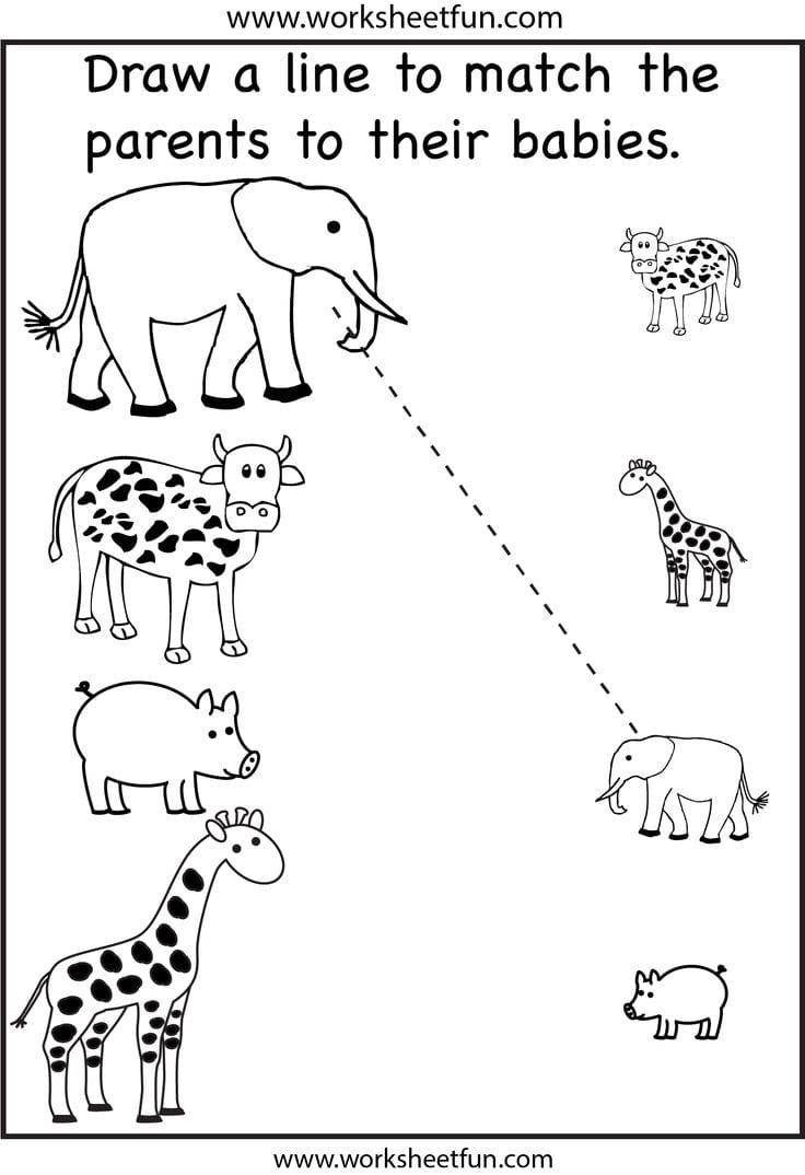 Pin By Zhenya Ilushevitch On Animals