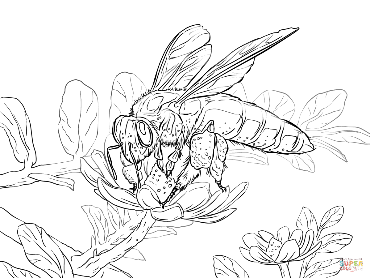 Giant Honey Bee Coloring Page