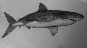 Shark Pictures To Draw