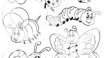 Insect Pictures For Preschool