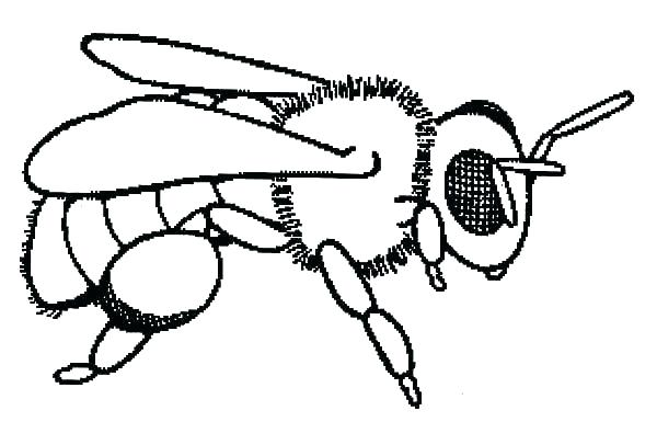 Download Coloring Pages Of A Honey Bee