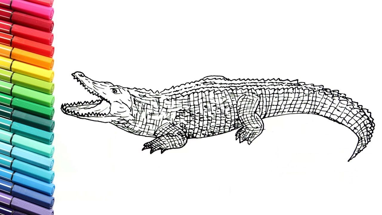 Drawing And Coloring Crocodile