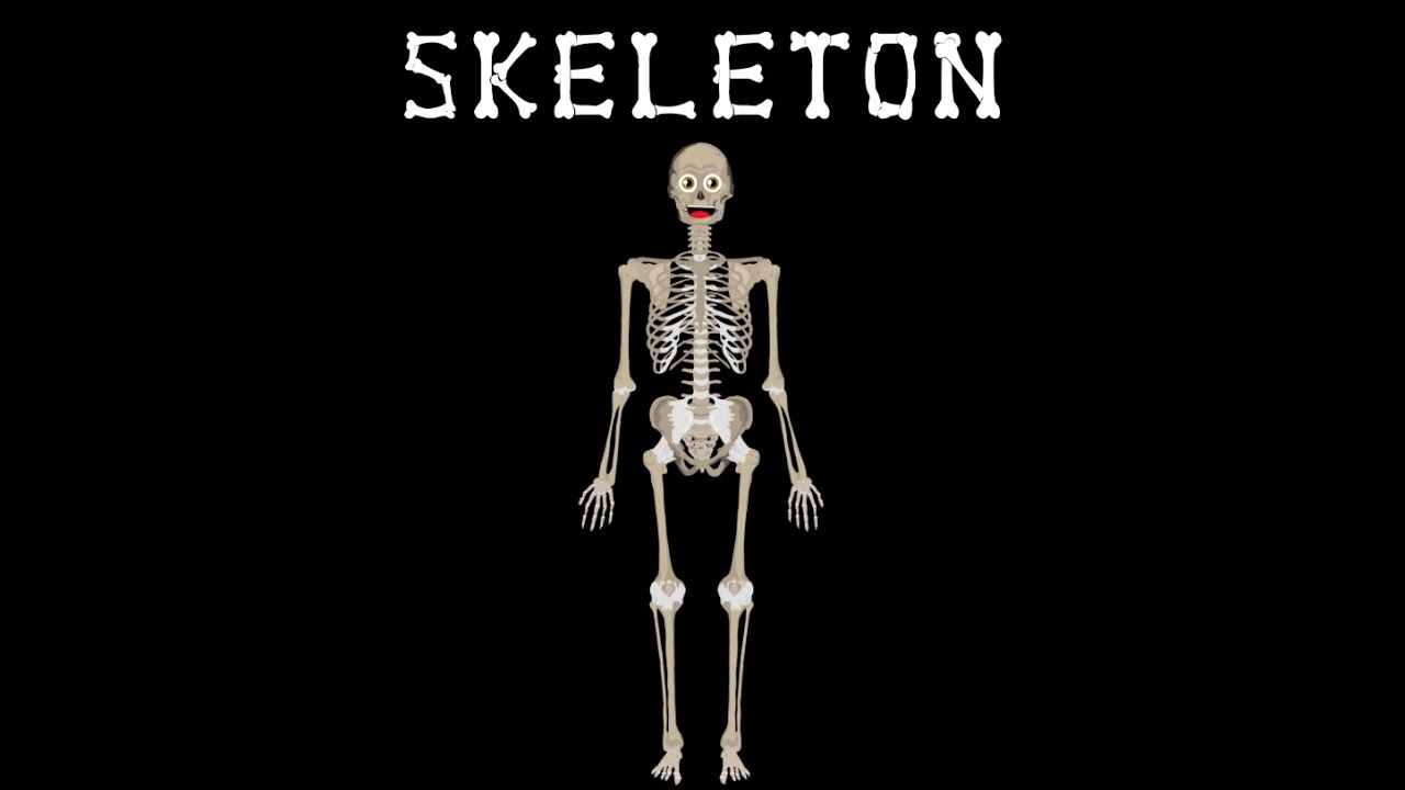 Skeletal System The Human Body For Kids Learn About The Human Body