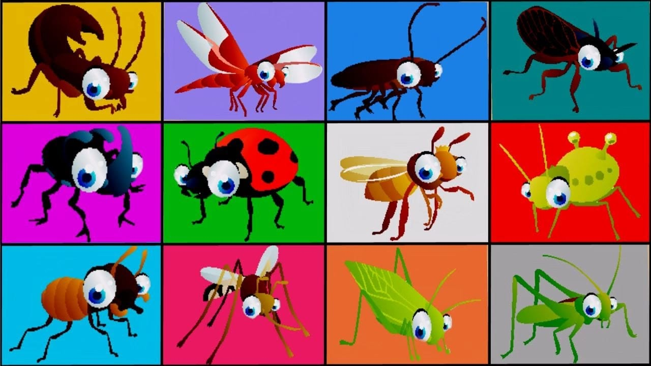 Insects For Children 🐞 Learn Bugs Names Animation Babies Toddlers
