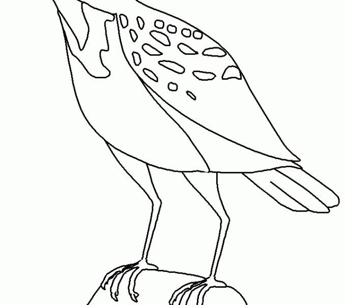 Meadowlark Coloring Page Elegant 13 Luxury Easy Animal Coloring