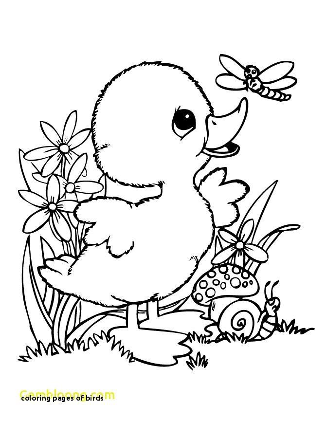 Meadowlark Coloring Page Beautiful Leeuwerik Coloring Pages