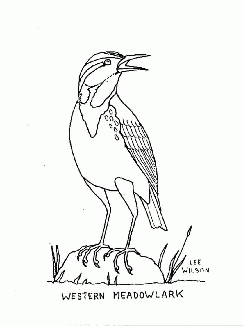 Meadowlark Coloring Page