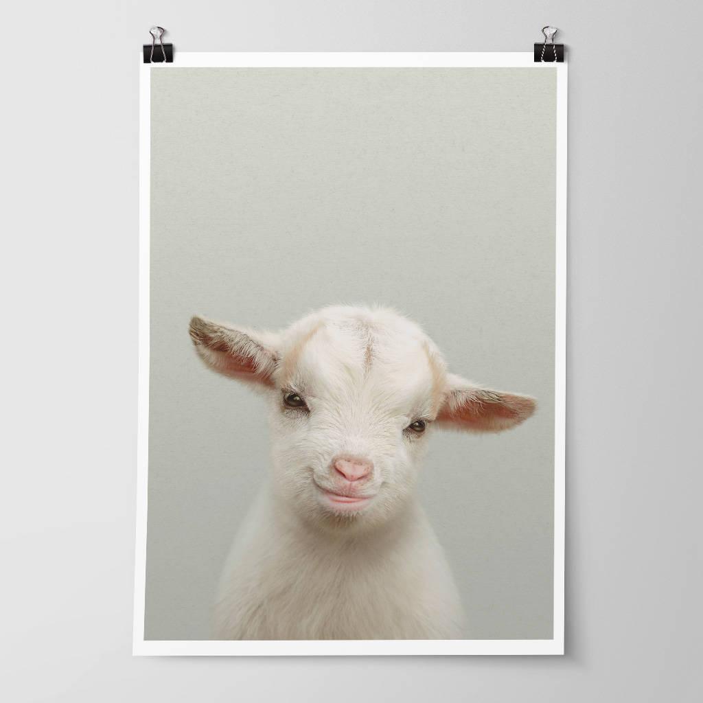 Nursery Decor Baby Goat Kid Animal Print By Strawberry Valley