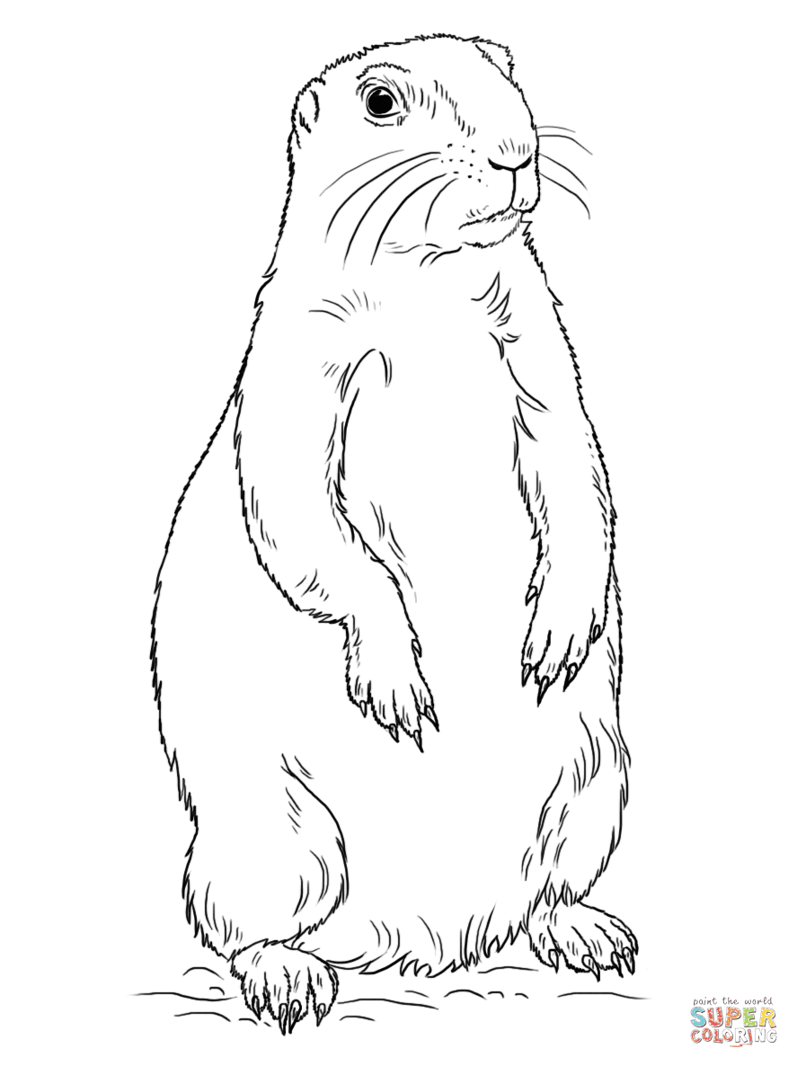 Prairie Dog Standing Coloring Page