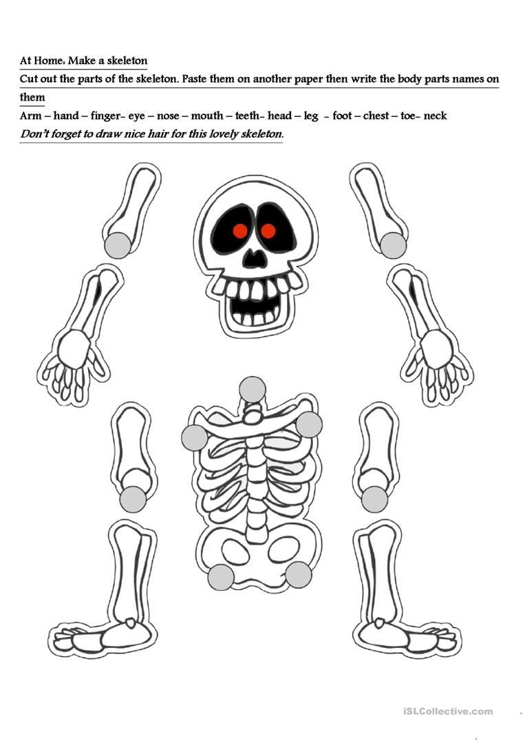 Skeleton Worksheet Worksheet