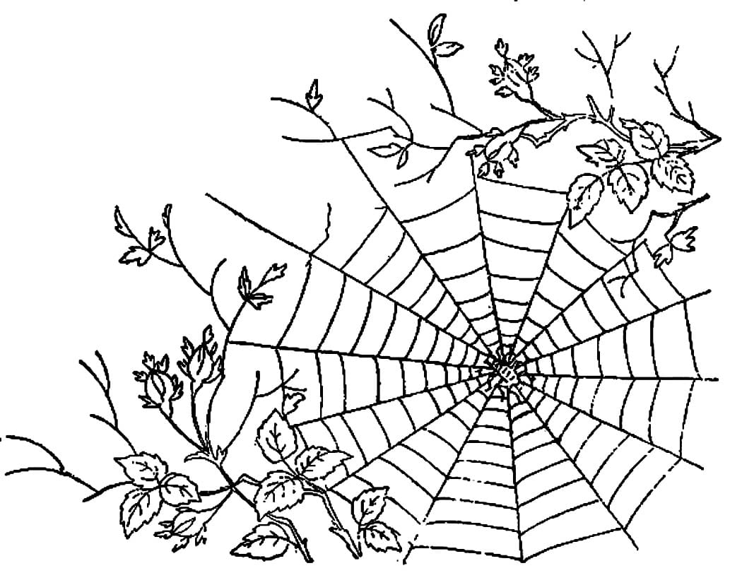Spider Web Coloring Page Sheets