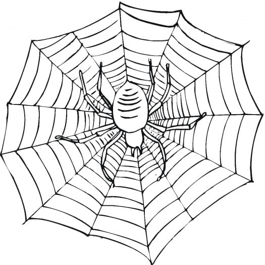 Spider Web Coloring Pages  500