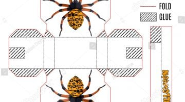 Spider Template To Print