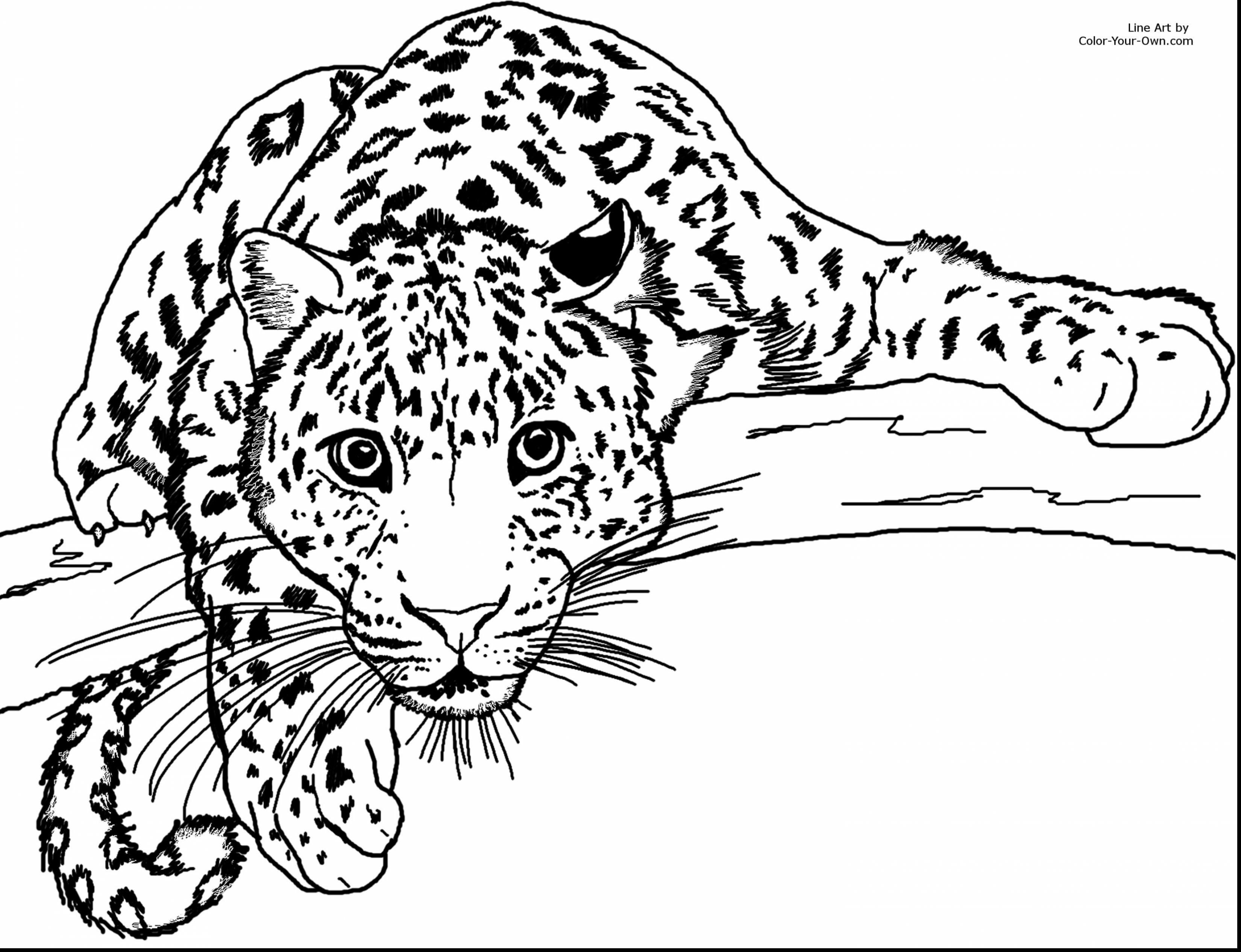 Sweet Cheetah Coloring Pages Terrific To Print Free Printable