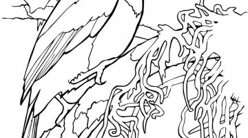 Tropical Bird Coloring Pages