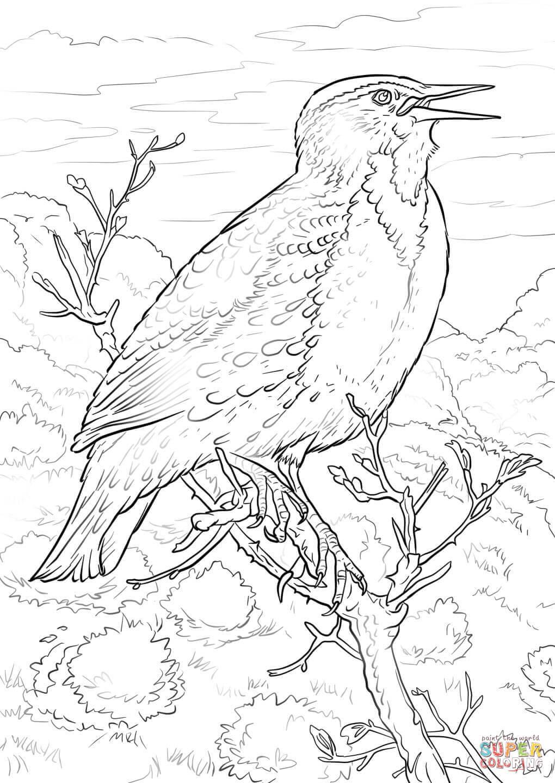 Eastern Meadowlark Coloring Page