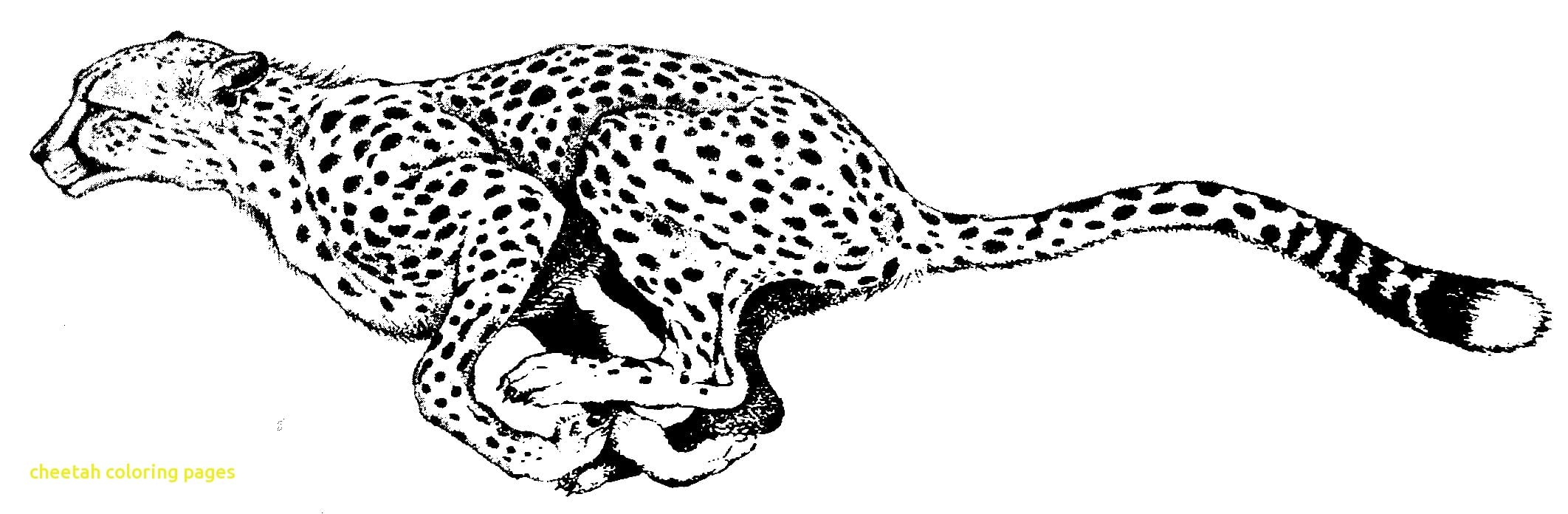 Winning Cheetah Coloring Page Printable In Tiny Color New To