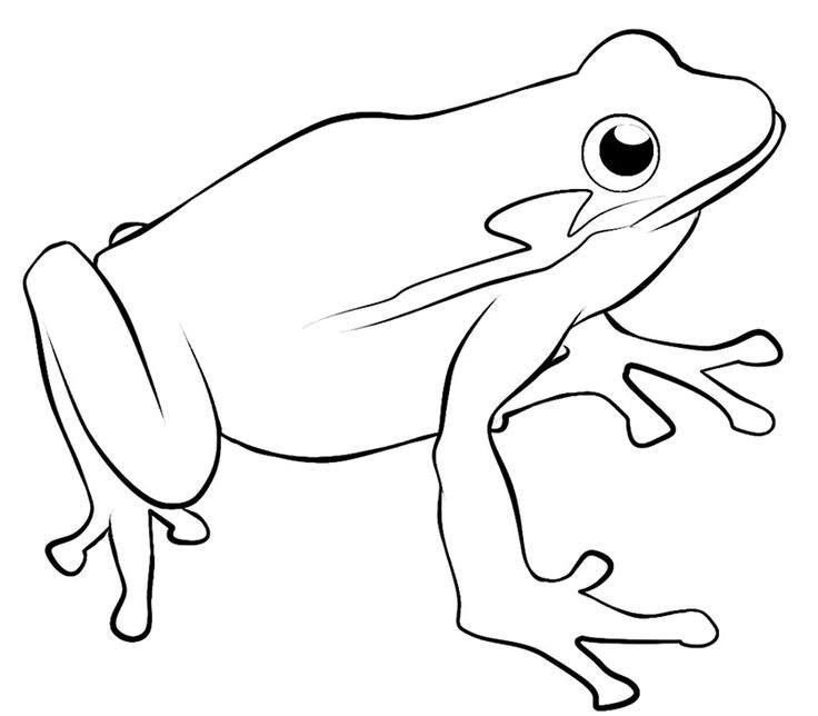 Tree Frog Coloring Pages Printable