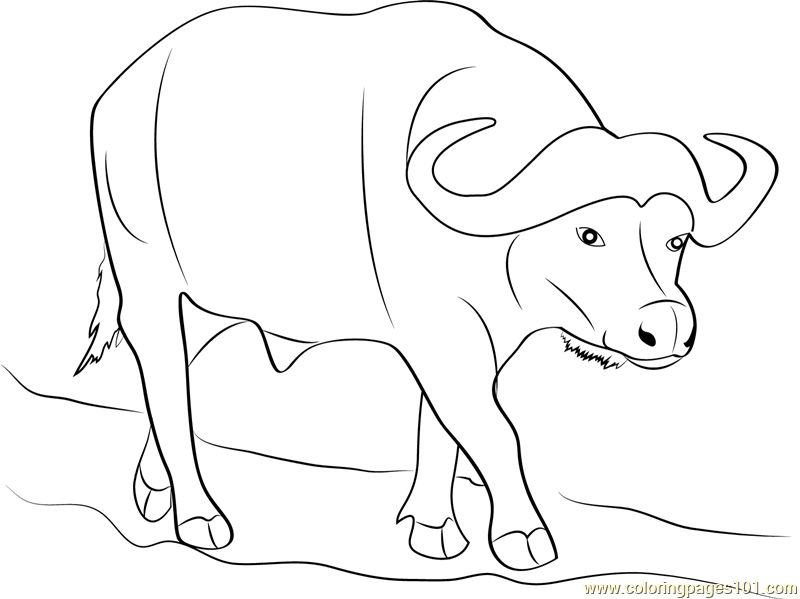 Buffalo Coloring Pages  1984468