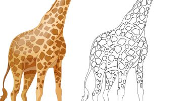 Outline Picture Of Giraffe