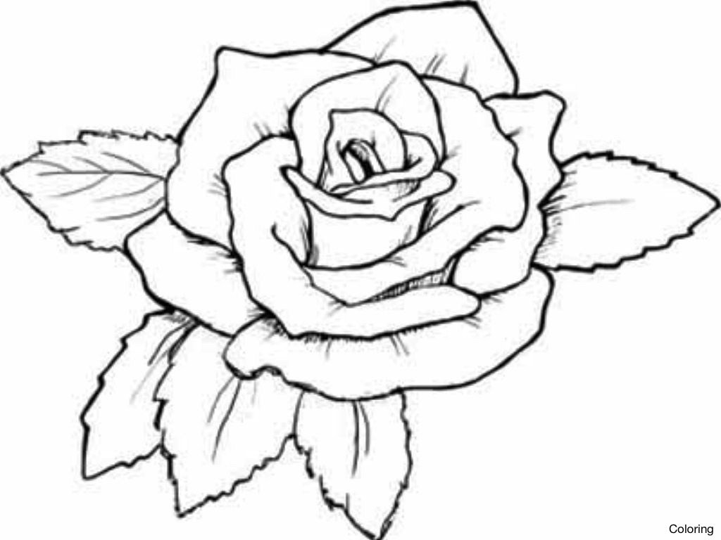 How To Draw Roses To Color And Print