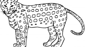 Cheetah Pictures To Color